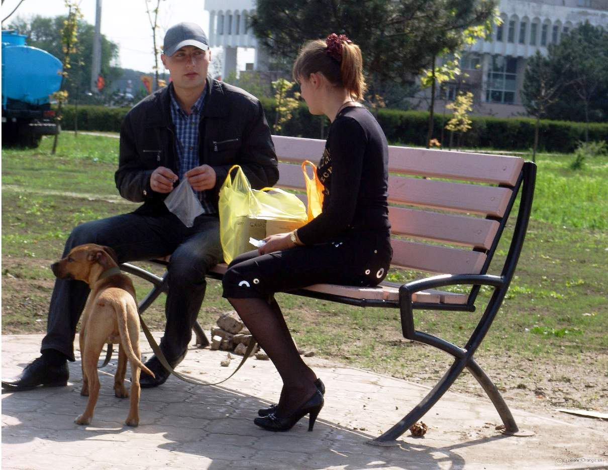 one way to improve your relationship is to go for a walk with your dog like this couple